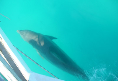 Dolphins Beside Us