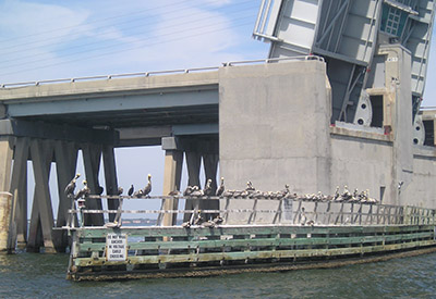 Pelicansat a Lift Bridge
