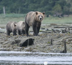 images/stories/Destinations/Canada/GRIZZLIES%20OF%20GLENDALE%20-%20familyfishingtrip_matt_allen%20-%20a.jpg