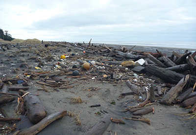 Plastic Pickup in Paradise - Driftwood catches debris
