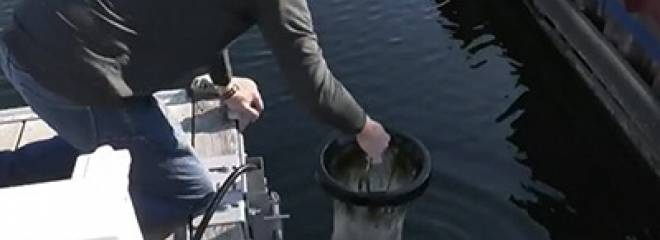 CTV News Covers Marinas Participating In The Great Lakes Plastic Cleanup